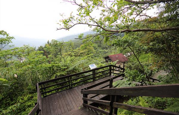 台北找茶園的環山步道,有五色鳥、台灣藍鵲穿梭樹林之中